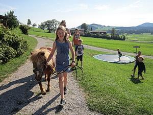 Ponys spazierenführen